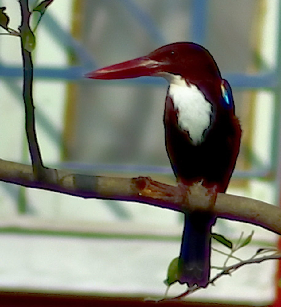 Kingfisher Bird R1774